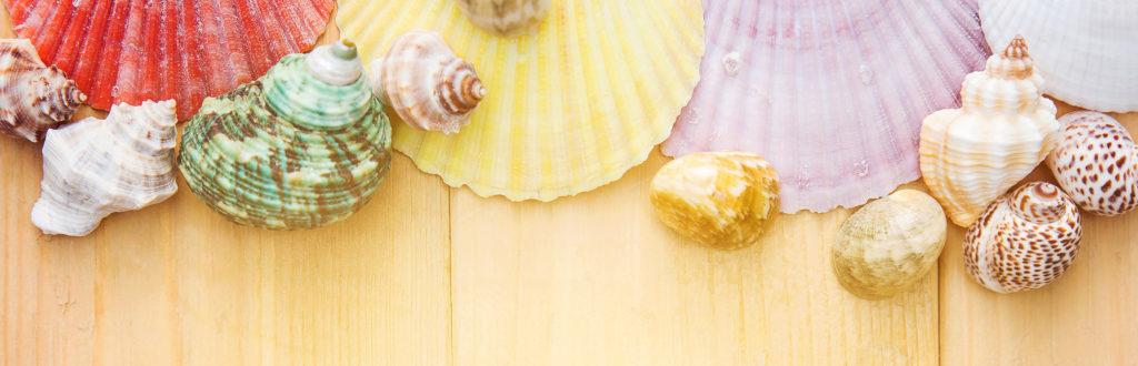 Summer seashells
